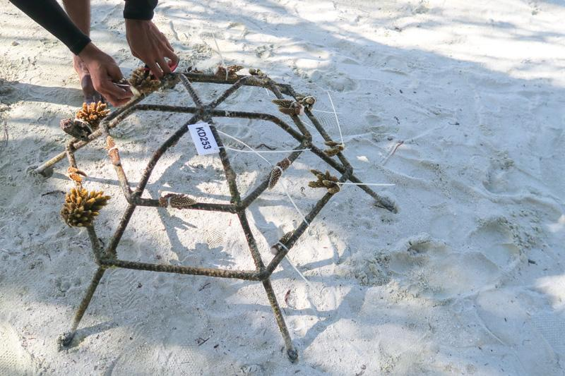 Adventure Guide: Must Try Activities in Maldives Asia Blog Maldives Tours